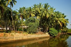 14. Agonda Palace Resort_River View Opp. Resort