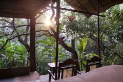 Khaama Kethna Jungle Resort View From Tree Top Cottage Agonda Beach South Goa
