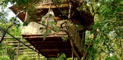 Khaama Kethna Jungle Resort Standard Tree House Agonda Beach South Goa