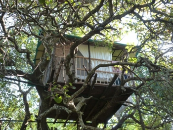 Khaama Kethna Jungle Resort Tree Top Cottage Agonda Beach South Goa