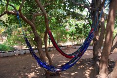 Mamoo's Place  - Hammocks in the gardens at Mamoo's Place in Patnem Beach, Goa