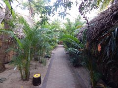 Palm Tree Goa Resort Garden Area Patnem Beach Goa. -
